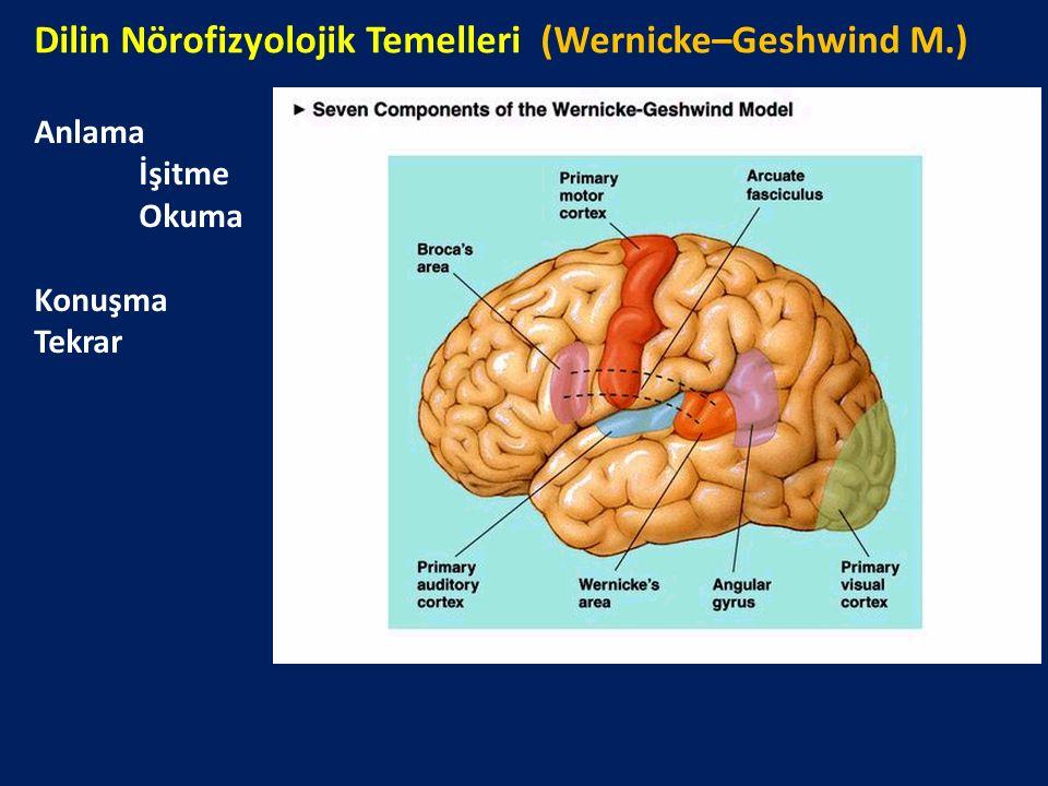 Dilin Nörofizyolojik Temelleri (Wernicke–Geshwind M.) Anlama İşitme Okuma Konuşma Tekrar