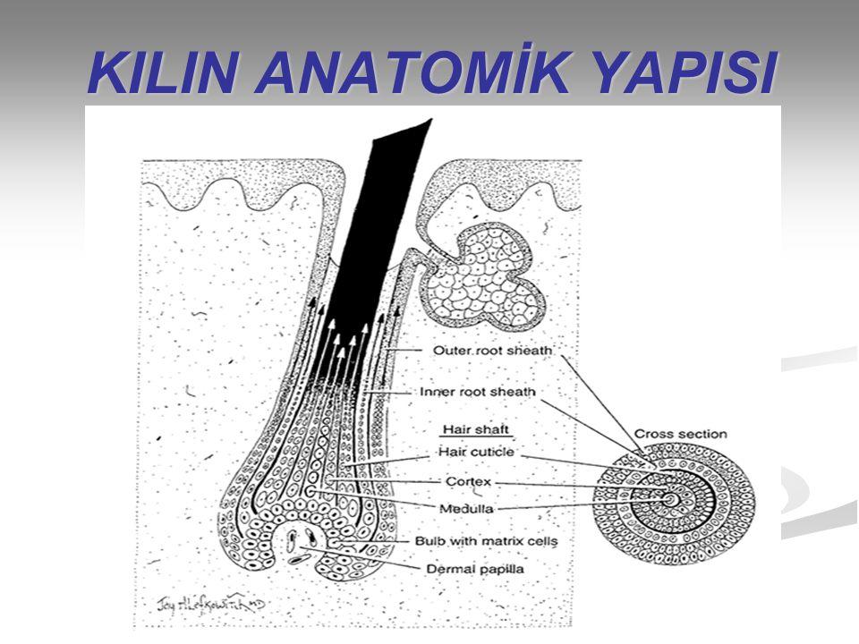KIL TİPLERİNİN SINIFLANDIRILMASI İnsan vücudunun kıllar pigment miktarı,şaft çapı,medulla ilik uzunluğu ve kıl uzunluğuna göre dört grupta sınıflandırılır.