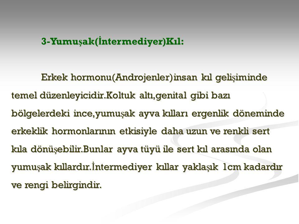 3-Yumu ş ak( İ ntermediyer)Kıl: Erkek hormonu(Androjenler)insan kıl geli ş iminde temel düzenleyicidir.Koltuk altı,genital gibi bazı bölgelerdeki ince
