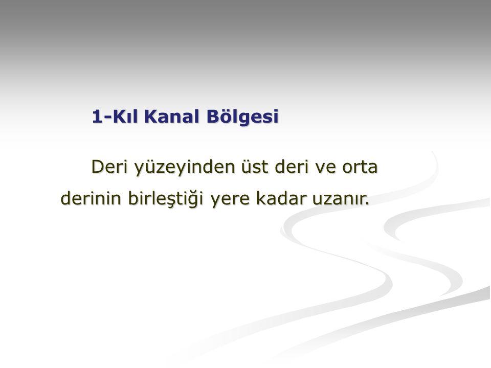 TAMAMEN BİTKİSELDİR.