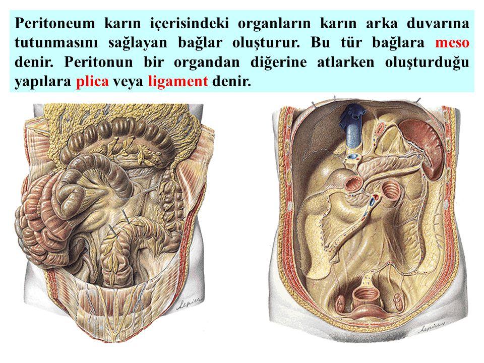 Peritoneum karın içerisindeki organların karın arka duvarına tutunmasını sağlayan bağlar oluşturur. Bu tür bağlara meso denir. Peritonun bir organdan