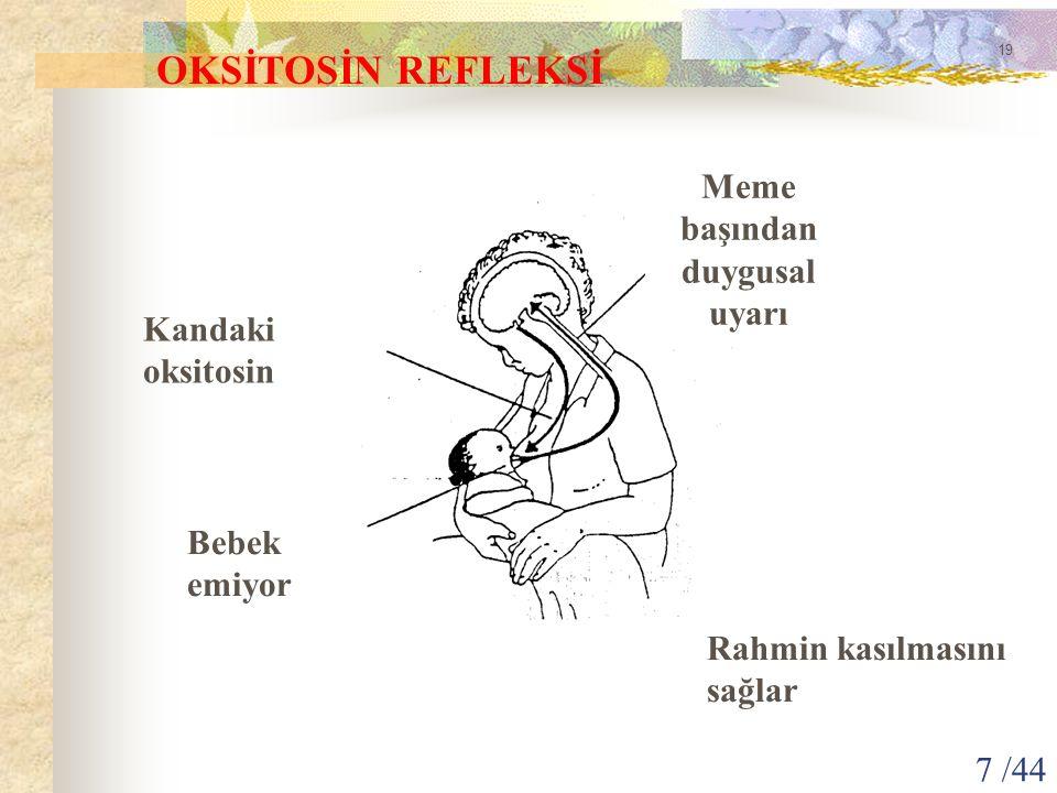 OKSİTOSİN REFLEKSİ Meme başından duygusal uyarı Kandaki oksitosin Bebek emiyor Rahmin kasılmasını sağlar 19 7 /44