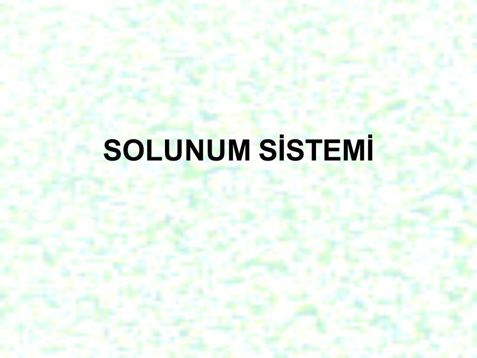 İki çeşit solunum vardır Hücre Dışı Solunum: Canlıların dış ortamdan O2 alıp, dış ortama CO2 vermeleridir.