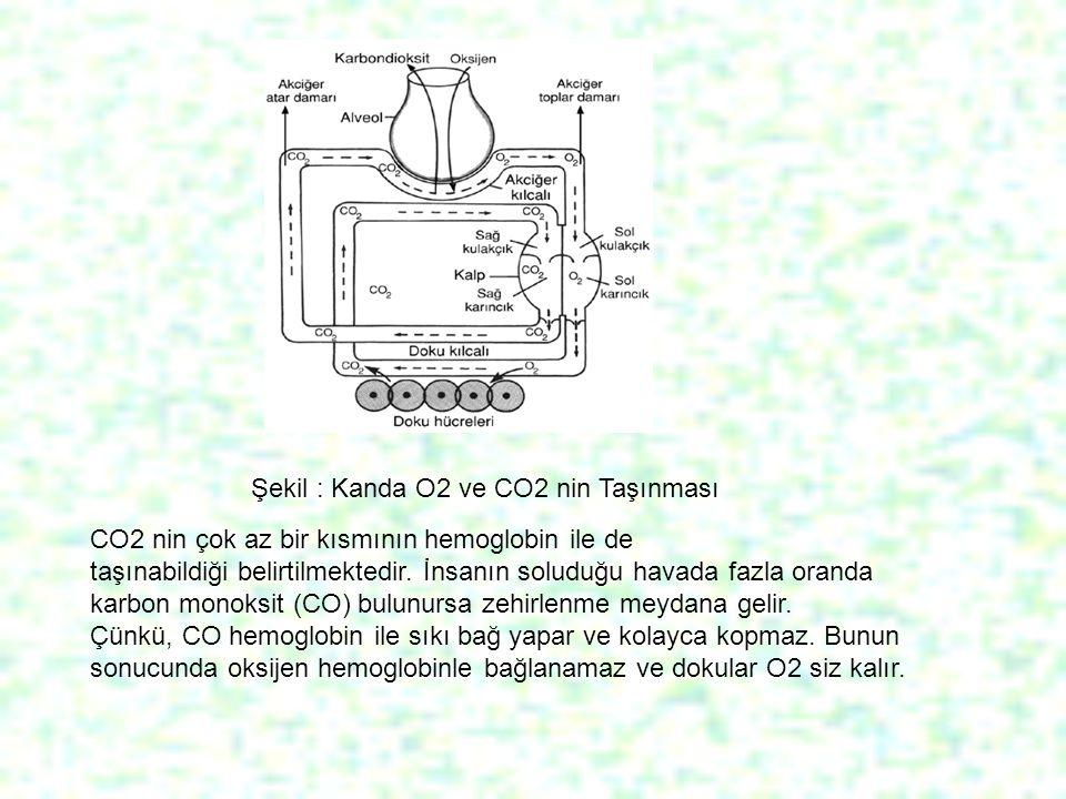 CO2 nin çok az bir kısmının hemoglobin ile de taşınabildiği belirtilmektedir. İnsanın soluduğu havada fazla oranda karbon monoksit (CO) bulunursa zehi