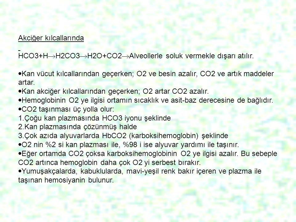 Akciğer kılcallarında HCO3+H  H2CO3  H2O+CO2  Alveollerle soluk vermekle dışarı atılır.  Kan vücut kılcallarından geçerken; O2 ve besin azalır, CO