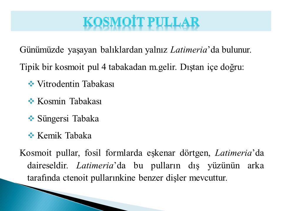 Günümüzde yaşayan balıklardan yalnız Latimeria'da bulunur. Tipik bir kosmoit pul 4 tabakadan m.gelir. Dıştan içe doğru:  Vitrodentin Tabakası  Kosmi