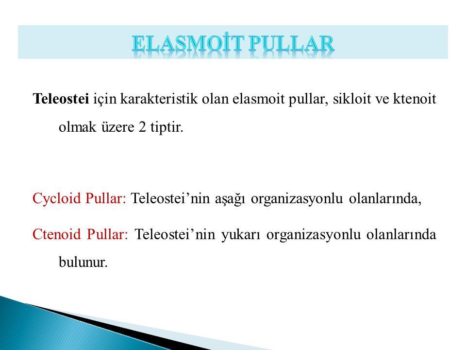 Teleostei için karakteristik olan elasmoit pullar, sikloit ve ktenoit olmak üzere 2 tiptir. Cycloid Pullar: Teleostei'nin aşağı organizasyonlu olanlar