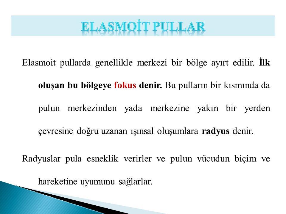 Elasmoit pullarda genellikle merkezi bir bölge ayırt edilir. İlk oluşan bu bölgeye fokus denir. Bu pulların bir kısmında da pulun merkezinden yada mer