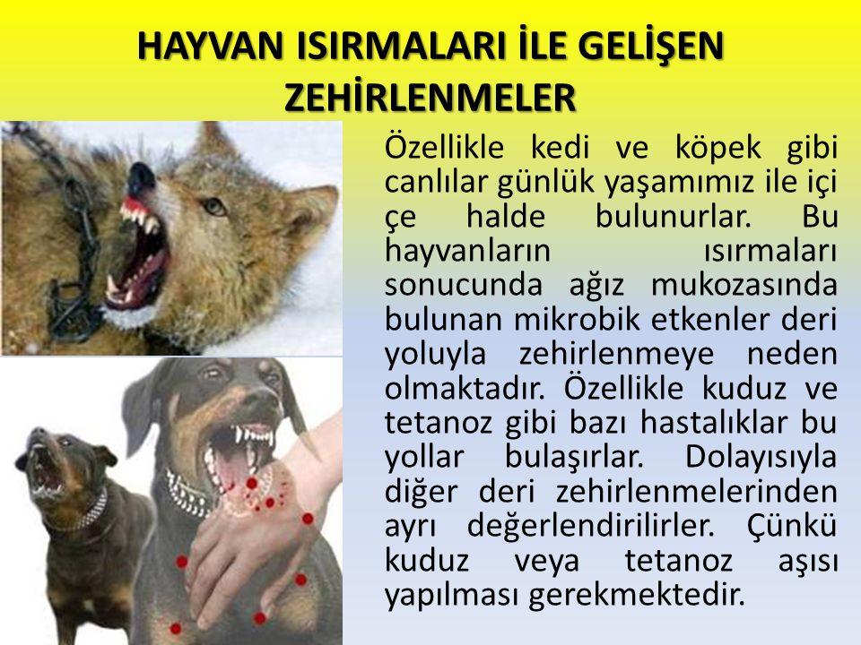 HAYVAN ISIRMALARI İLE GELİŞEN ZEHİRLENMELER Özellikle kedi ve köpek gibi canlılar günlük yaşamımız ile içi çe halde bulunurlar. Bu hayvanların ısırmal