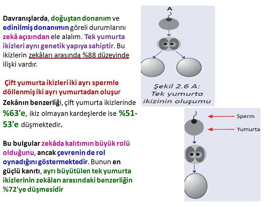 Davranışlarda, doğuştan donanım ve edinilmiş donanımın göreli durumlarını zekâ açısından ele alalım. Tek yumurta ikizleri aynı genetik yapıya sahiptir