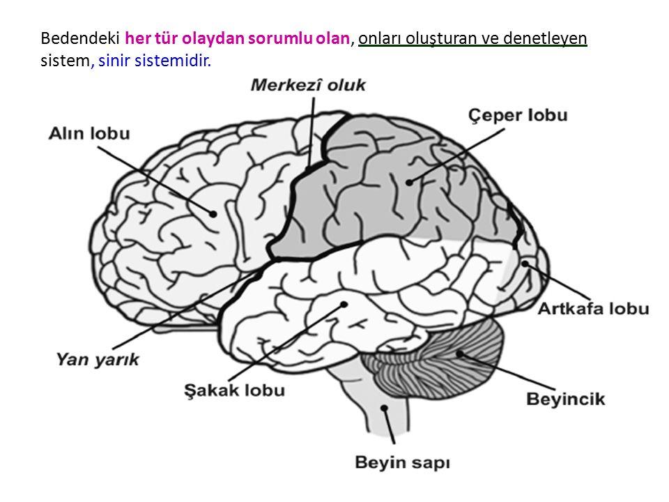 Bedendeki her tür olaydan sorumlu olan, onları oluşturan ve denetleyen sistem, sinir sistemidir.
