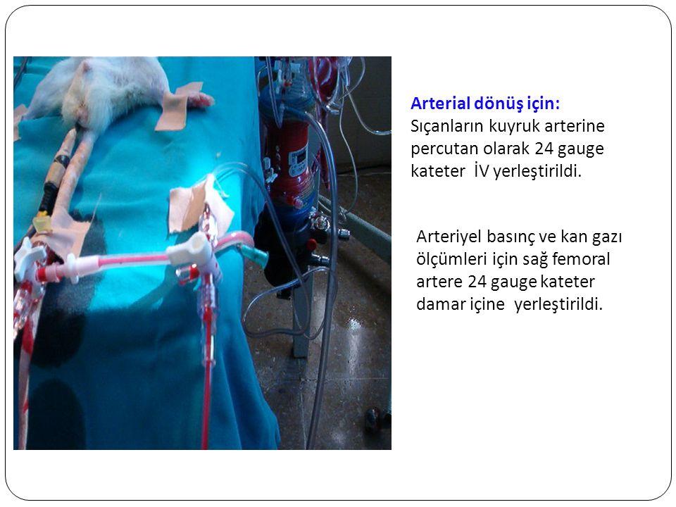 GEREÇ ve YÖNTEM Arterial dönüş için: Sıçanların kuyruk arterine percutan olarak 24 gauge kateter İV yerleştirildi. Arteriyel basınç ve kan gazı ölçüml