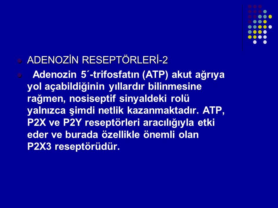 ADENOZİN RESEPTÖRLERİ-2 ADENOZİN RESEPTÖRLERİ-2 Adenozin 5´-trifosfatın (ATP) akut ağrıya yol açabildiğinin yıllardır bilinmesine rağmen, nosiseptif s