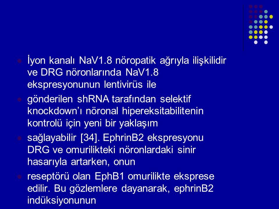İyon kanalı NaV1.8 nöropatik ağrıyla ilişkilidir ve DRG nöronlarında NaV1.8 ekspresyonunun lentivirüs ile gönderilen shRNA tarafından selektif knockdo
