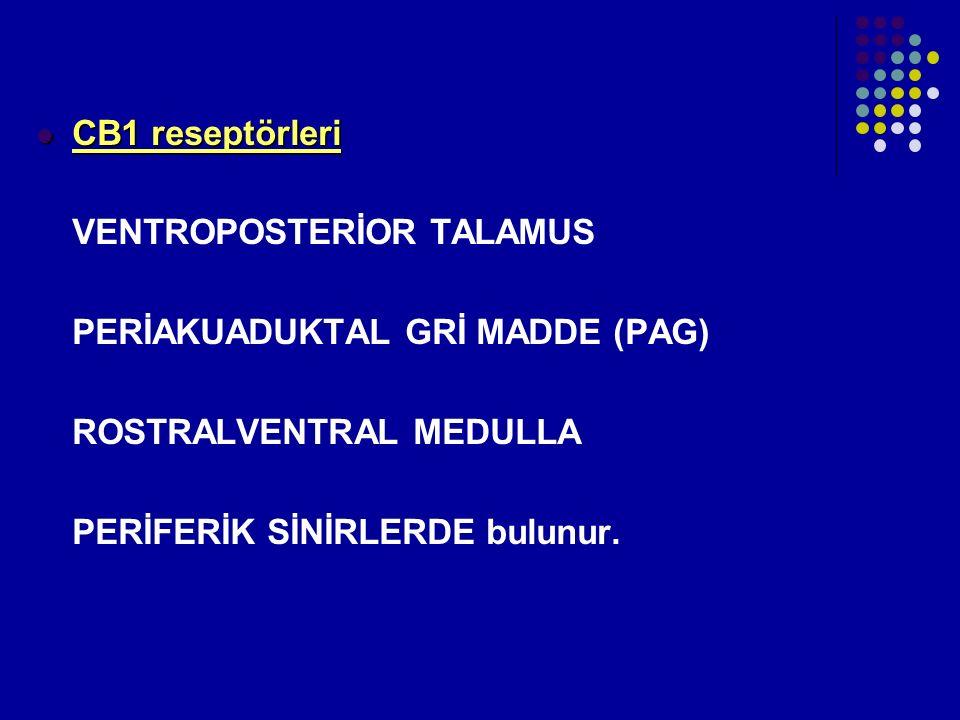 CB1 reseptörleri CB1 reseptörleri VENTROPOSTERİOR TALAMUS PERİAKUADUKTAL GRİ MADDE (PAG) ROSTRALVENTRAL MEDULLA PERİFERİK SİNİRLERDE bulunur.