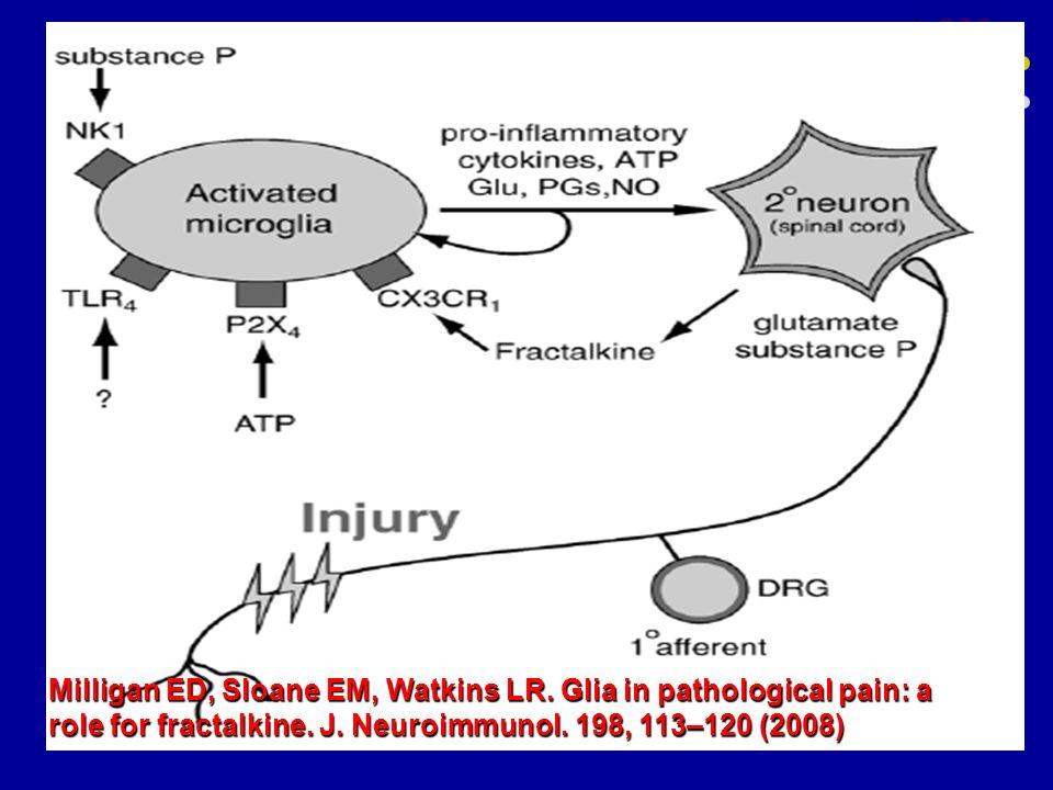 Milligan ED, Sloane EM, Watkins LR. Glia in pathological pain: a role for fractalkine. J. Neuroimmunol. 198, 113–120 (2008)