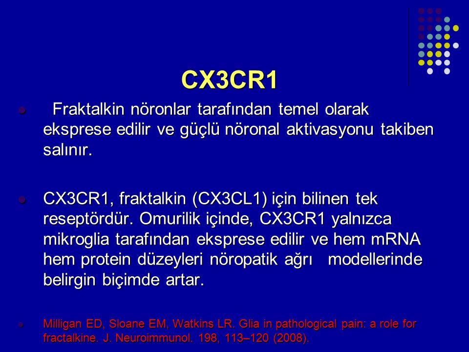 CX3CR1 Fraktalkin nöronlar tarafından temel olarak eksprese edilir ve güçlü nöronal aktivasyonu takiben salınır. Fraktalkin nöronlar tarafından temel