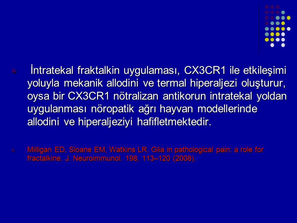 İntratekal fraktalkin uygulaması, CX3CR1 ile etkileşimi yoluyla mekanik allodini ve termal hiperaljezi oluşturur, oysa bir CX3CR1 nötralizan antikorun