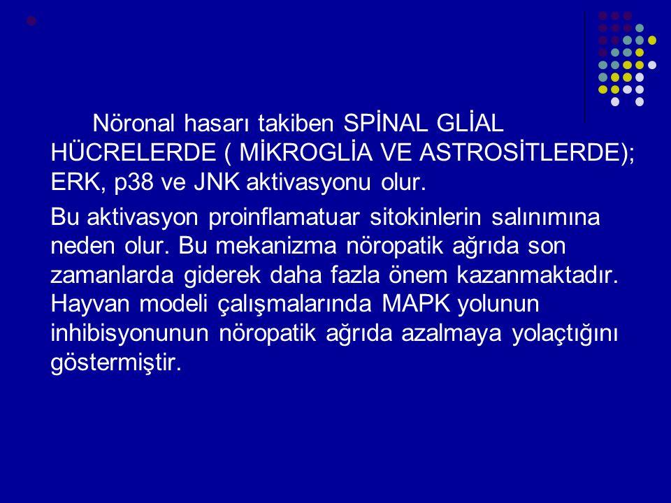 Nöronal hasarı takiben SPİNAL GLİAL HÜCRELERDE ( MİKROGLİA VE ASTROSİTLERDE); ERK, p38 ve JNK aktivasyonu olur. Bu aktivasyon proinflamatuar sitokinle