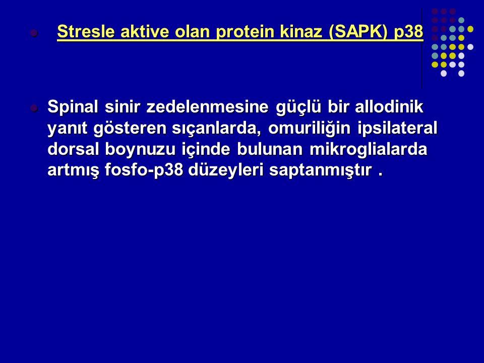 Stresle aktive olan protein kinaz (SAPK) p38 Stresle aktive olan protein kinaz (SAPK) p38 Spinal sinir zedelenmesine güçlü bir allodinik yanıt göstere