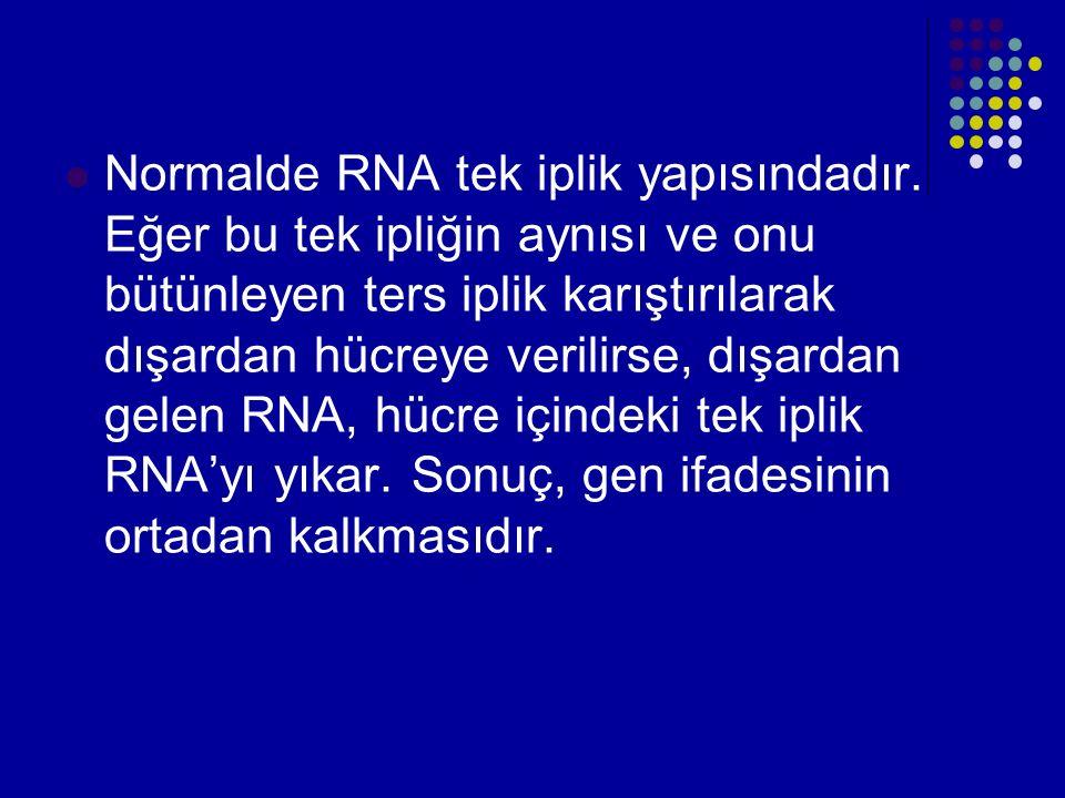 Normalde RNA tek iplik yapısındadır. Eğer bu tek ipliğin aynısı ve onu bütünleyen ters iplik karıştırılarak dışardan hücreye verilirse, dışardan gelen