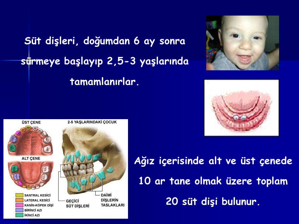 Süt dişleri, doğumdan 6 ay sonra sürmeye başlayıp 2,5-3 yaşlarında tamamlanırlar. Ağız içerisinde alt ve üst çenede 10 ar tane olmak üzere toplam 20 s