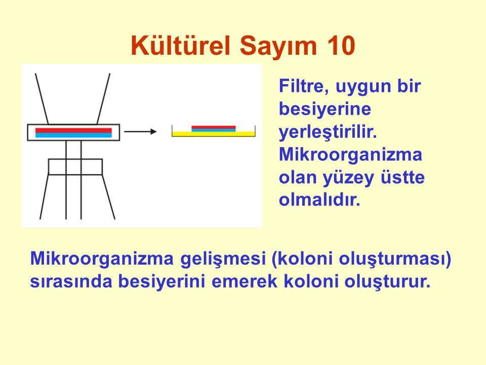 Kültürel Sayım 10 Filtre, uygun bir besiyerine yerleştirilir. Mikroorganizma olan yüzey üstte olmalıdır. Mikroorganizma gelişmesi (koloni oluşturması)