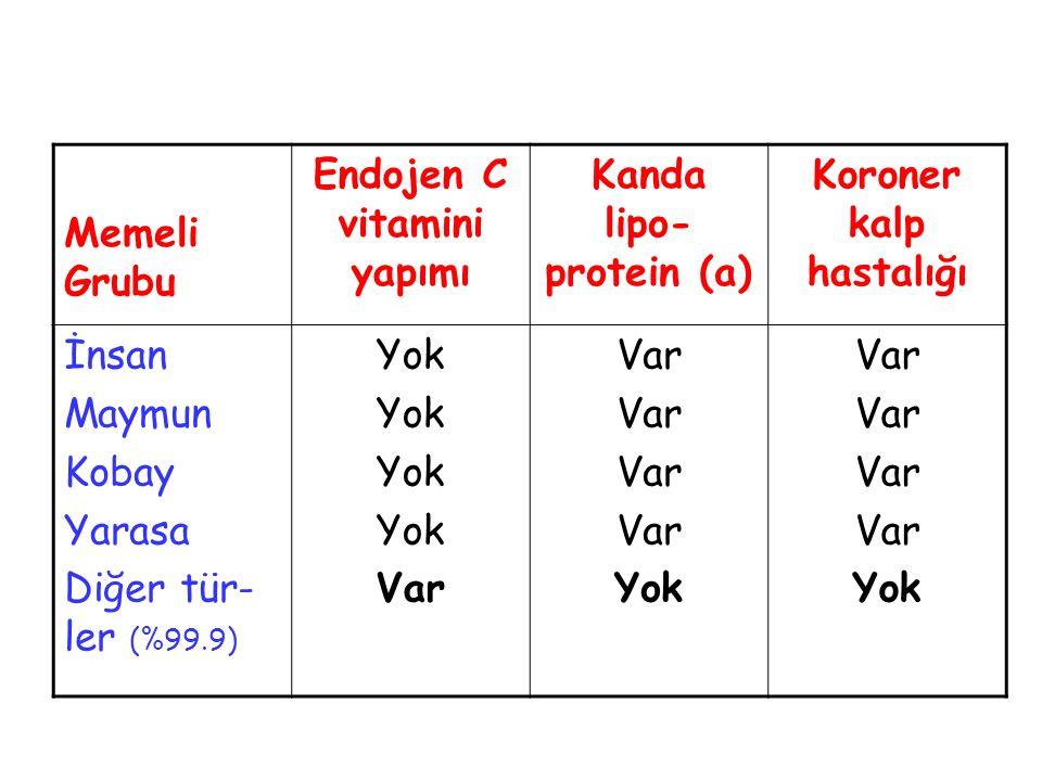 Memeli Grubu Endojen C vitamini yapımı Kanda lipo- protein (a) Koroner kalp hastalığı İnsan Maymun Kobay Yarasa Diğer tür- ler (%99.9) Yok Var Yok Var