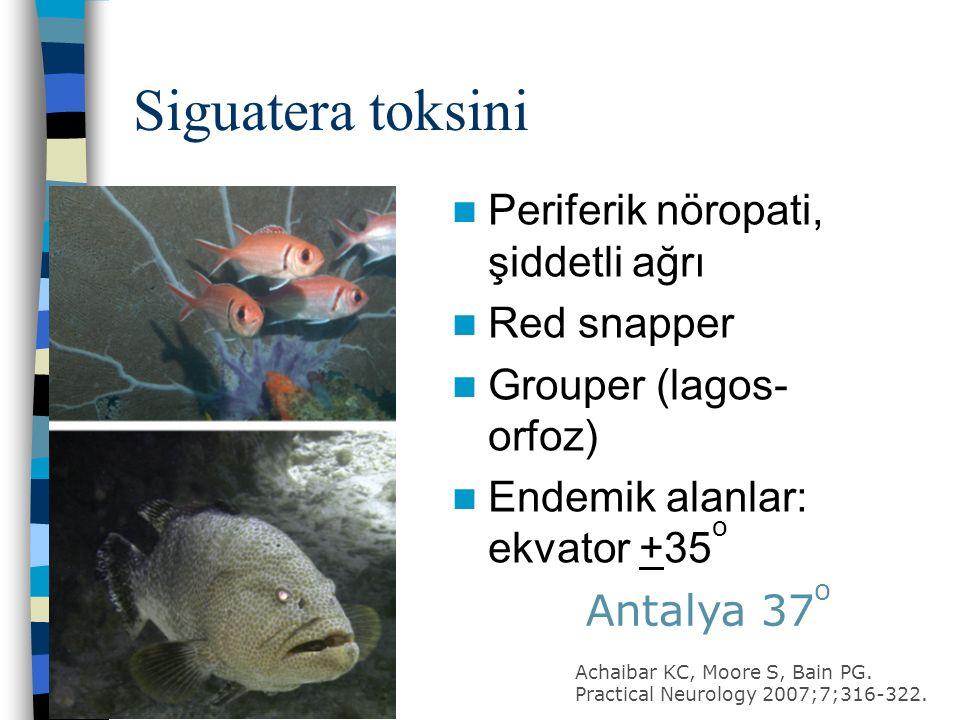 Siguatera toksini Periferik nöropati, şiddetli ağrı Red snapper Grouper (lagos- orfoz) Endemik alanlar: ekvator +35 o Antalya 37 o Achaibar KC, Moore S, Bain PG.