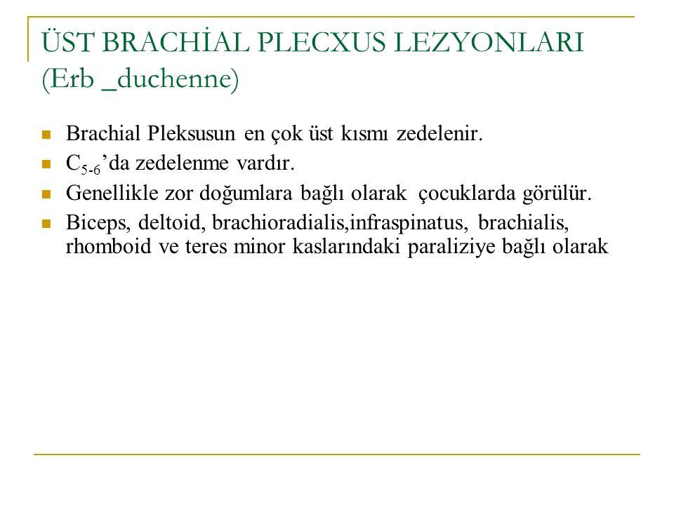 ÜST BRACHİAL PLECXUS LEZYONLARI (Erb _duchenne) Brachial Pleksusun en çok üst kısmı zedelenir. C 5-6 'da zedelenme vardır. Genellikle zor doğumlara ba