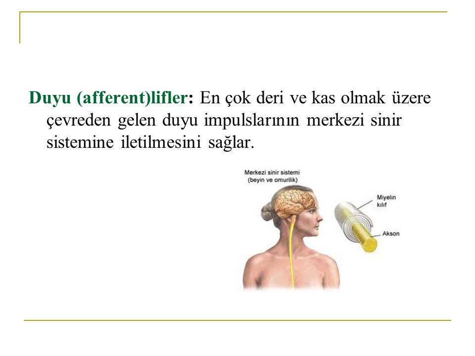 Periferik sinir yaralanmalarının etkileri, motor, duyu ve otonomik liflerin harabiyetine göre farklılık gösterir.