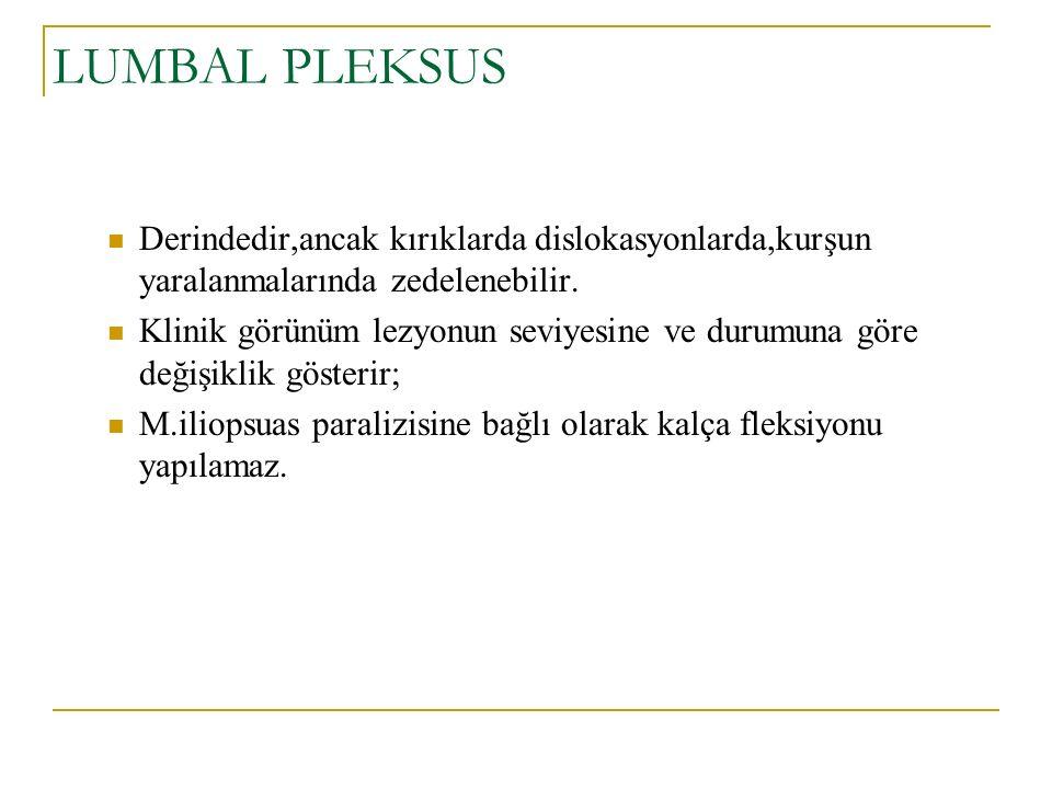 LUMBAL PLEKSUS Derindedir,ancak kırıklarda dislokasyonlarda,kurşun yaralanmalarında zedelenebilir.