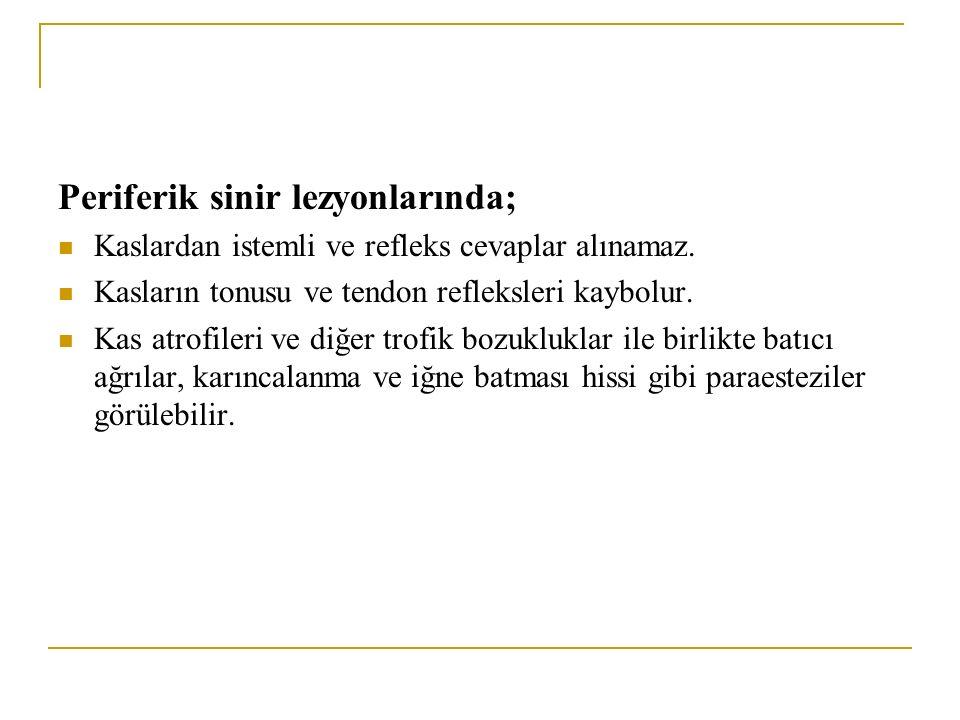 Periferik Sinir Yaralanmalarının Nedenleri 1.Kuvvetli Traksiyon 2.