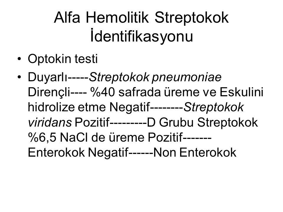 Alfa Hemolitik Streptokok İdentifikasyonu Optokin testi Duyarlı-----Streptokok pneumoniae Dirençli---- %40 safrada üreme ve Eskulini hidrolize etme Ne