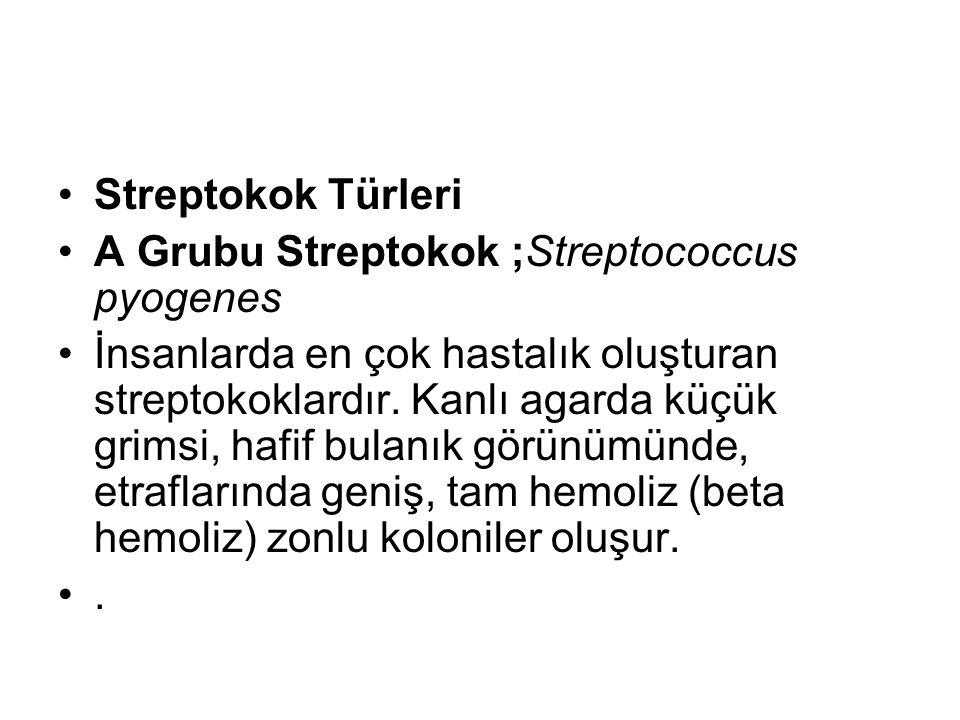 Streptokok Türleri A Grubu Streptokok ;Streptococcus pyogenes İnsanlarda en çok hastalık oluşturan streptokoklardır. Kanlı agarda küçük grimsi, hafif