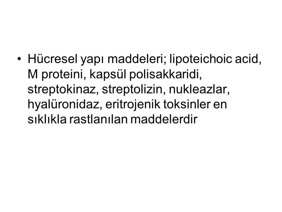 Hücresel yapı maddeleri; lipoteichoic acid, M proteini, kapsül polisakkaridi, streptokinaz, streptolizin, nukleazlar, hyalüronidaz, eritrojenik toksin