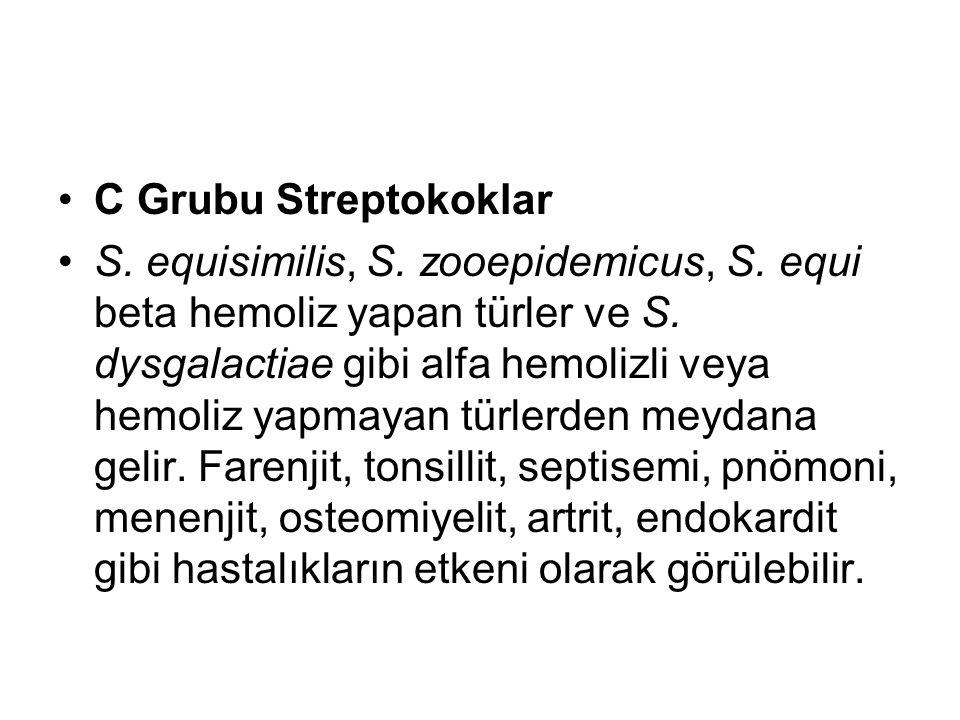 C Grubu Streptokoklar S. equisimilis, S. zooepidemicus, S. equi beta hemoliz yapan türler ve S. dysgalactiae gibi alfa hemolizli veya hemoliz yapmayan