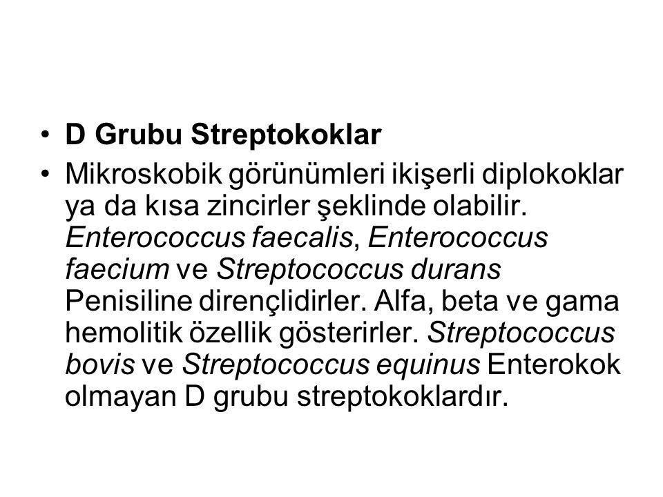 D Grubu Streptokoklar Mikroskobik görünümleri ikişerli diplokoklar ya da kısa zincirler şeklinde olabilir. Enterococcus faecalis, Enterococcus faecium