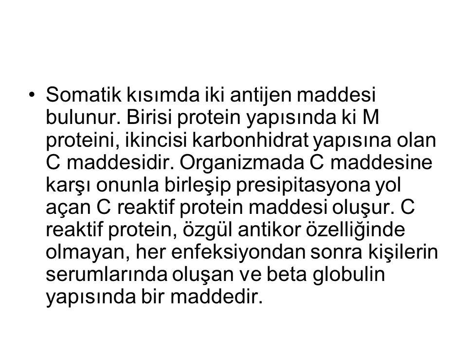 Somatik kısımda iki antijen maddesi bulunur. Birisi protein yapısında ki M proteini, ikincisi karbonhidrat yapısına olan C maddesidir. Organizmada C m
