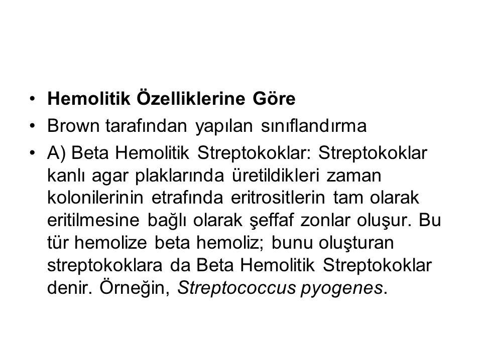 Hemolitik Özelliklerine Göre Brown tarafından yapılan sınıflandırma A) Beta Hemolitik Streptokoklar: Streptokoklar kanlı agar plaklarında üretildikler