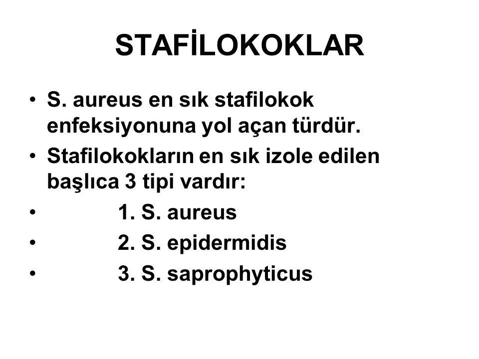 STAFİLOKOKLAR S. aureus en sık stafilokok enfeksiyonuna yol açan türdür. Stafilokokların en sık izole edilen başlıca 3 tipi vardır: 1. S. aureus 2. S.