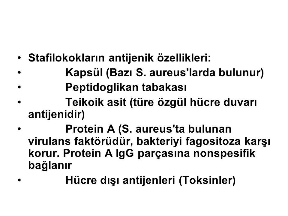 Stafilokokların antijenik özellikleri: Kapsül (Bazı S. aureus'larda bulunur) Peptidoglikan tabakası Teikoik asit (türe özgül hücre duvarı antijenidir)