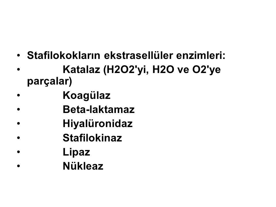 Stafilokokların ekstrasellüler enzimleri: Katalaz (H2O2'yi, H2O ve O2'ye parçalar) Koagülaz Beta-laktamaz Hiyalüronidaz Stafilokinaz Lipaz Nükleaz