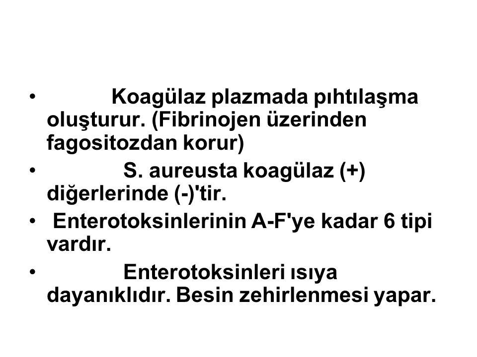 Koagülaz plazmada pıhtılaşma oluşturur. (Fibrinojen üzerinden fagositozdan korur) S. aureusta koagülaz (+) diğerlerinde (-)'tir. Enterotoksinlerinin A