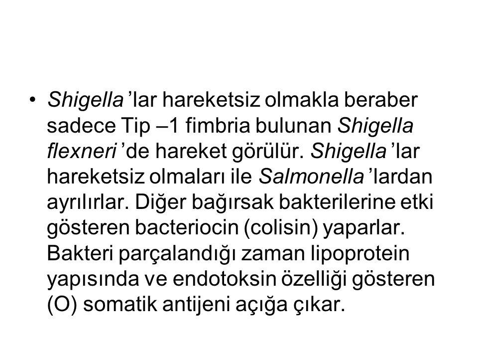 Shigella 'lar hareketsiz olmakla beraber sadece Tip –1 fimbria bulunan Shigella flexneri 'de hareket görülür. Shigella 'lar hareketsiz olmaları ile Sa