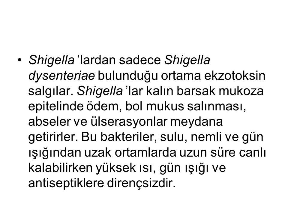 Shigella 'lardan sadece Shigella dysenteriae bulunduğu ortama ekzotoksin salgılar. Shigella 'lar kalın barsak mukoza epitelinde ödem, bol mukus salınm