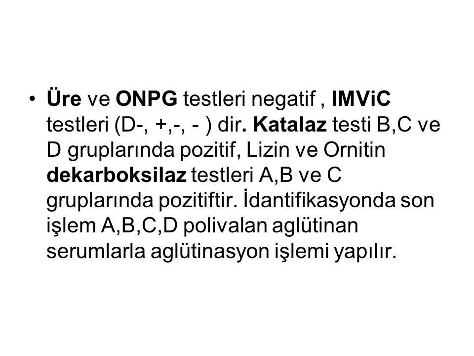 Üre ve ONPG testleri negatif, IMViC testleri (D-, +,-, - ) dir. Katalaz testi B,C ve D gruplarında pozitif, Lizin ve Ornitin dekarboksilaz testleri A,