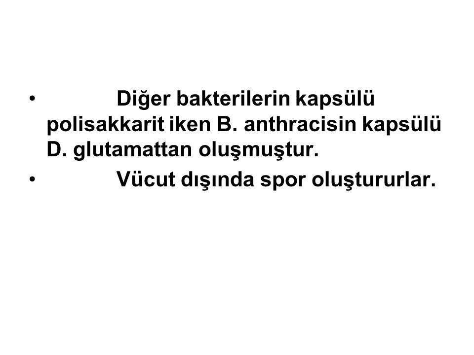 Diğer bakterilerin kapsülü polisakkarit iken B. anthracisin kapsülü D. glutamattan oluşmuştur. Vücut dışında spor oluştururlar.