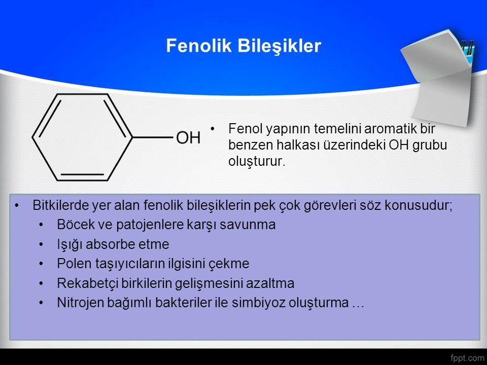 Fenolik Bileşikler Fenol yapının temelini aromatik bir benzen halkası üzerindeki OH grubu oluşturur.