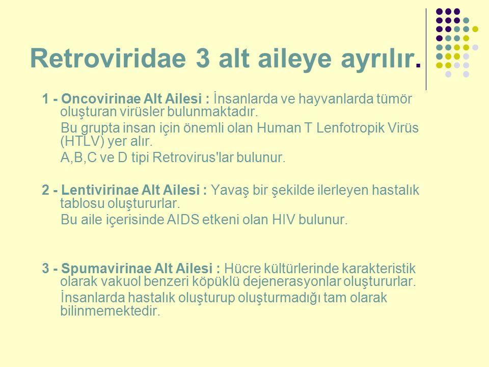 Retroviridae 3 alt aileye ayrılır. 1 - Oncovirinae Alt Ailesi : İnsanlarda ve hayvanlarda tümör oluşturan virüsler bulunmaktadır. Bu grupta insan için